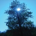 Ishq : winter Light