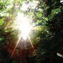 Ishq : summer light