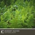 Robert Davies : afterlight