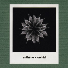 Anthéne : orchid