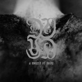 Common Eider, King Eider – a wound of body