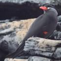Havdis – fugløya