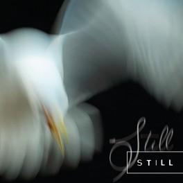 Aria Rostami, Daniel Blomquist – still